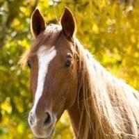 Heste-produkter