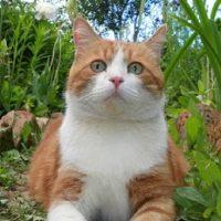 Katte- & hunde-produkter
